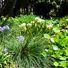 Lily pond at Huntington Library gardens in Pasadena California 13