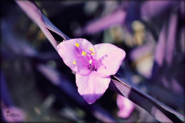 Garden Trifold