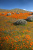 5D 1392 Poppy Reserve of California using Photomatix HDR technique.