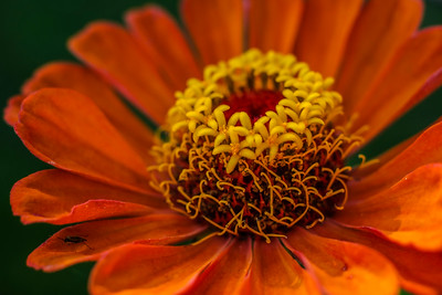 flowers17-008
