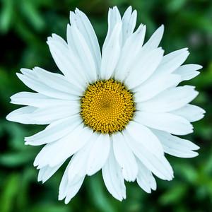 flowers17-010
