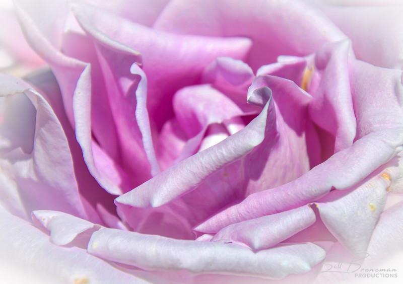 Flower 129
