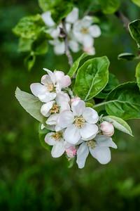 spring branch-004