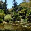 Lily pond at Huntington Library gardens in Pasadena Califronia 11