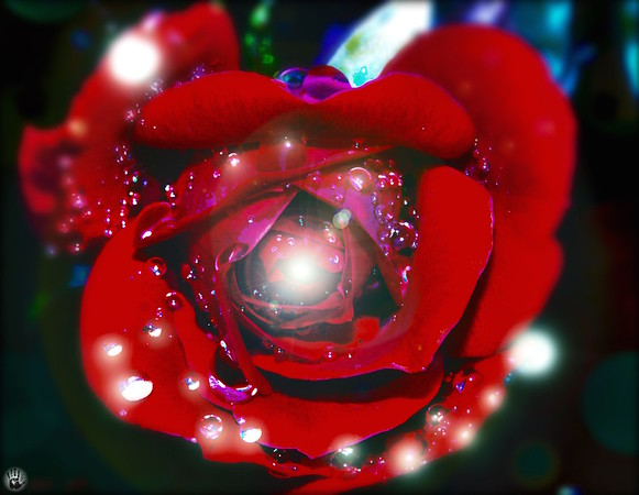 Universe Around the Rose