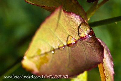 Dew in the shape of leaf