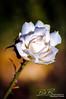 Flower 57