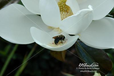Magnolia Flower_003