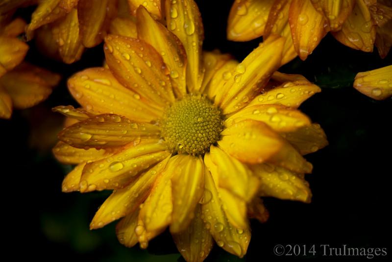 Golden droplets
