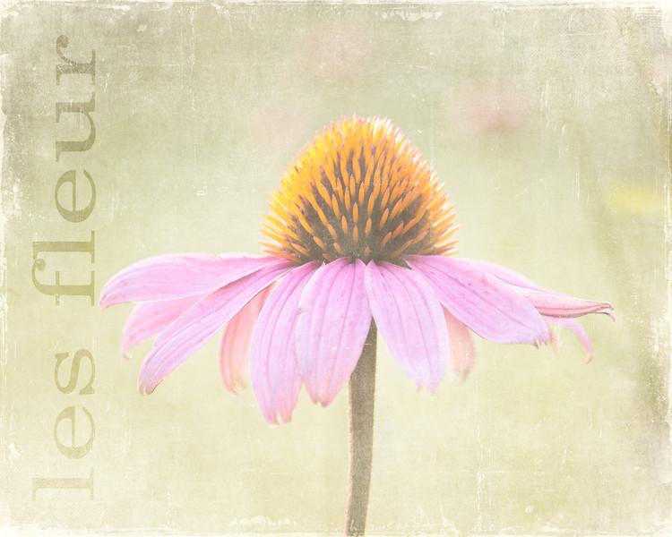 les fleur - 8x10 size