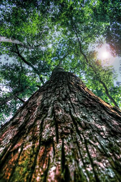 IMG_3880 swamp tree HDR