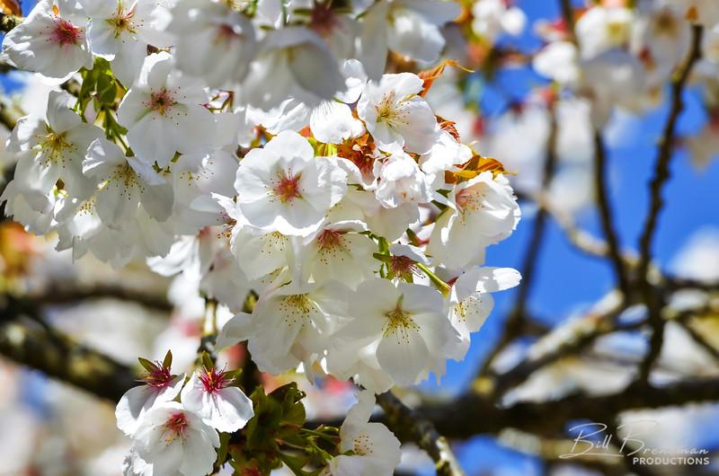 Flower 113