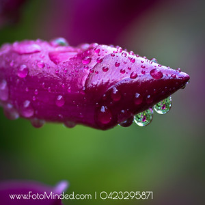 Dew drops due to fall