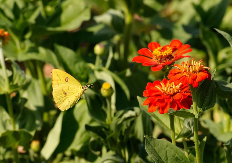 Fluttering through Life