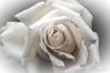 Flower 85
