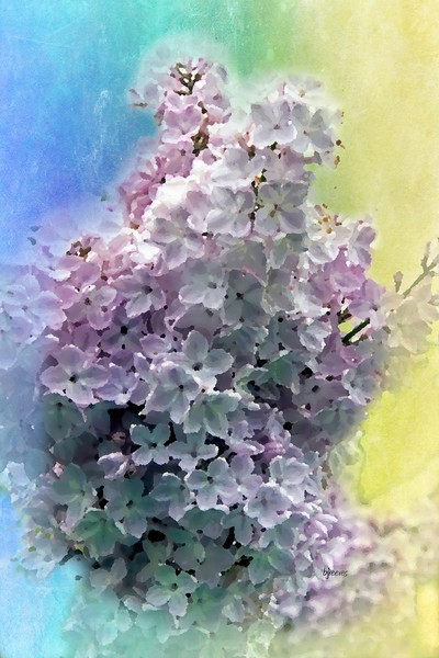 Lilac blossoms painting in Rochester