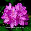 WNC Flowers0006