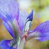 Iris Translucence