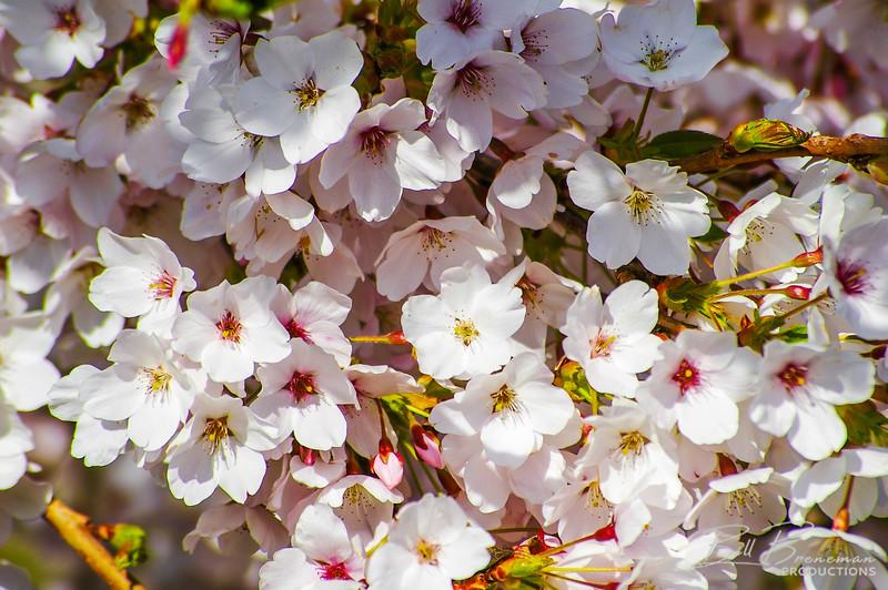 Flower 104