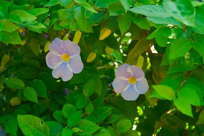 Flowers in Auroville