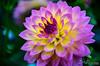 Flower 216
