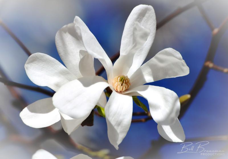 Flower 196