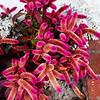 Attractive Plant in Laguna Beach California