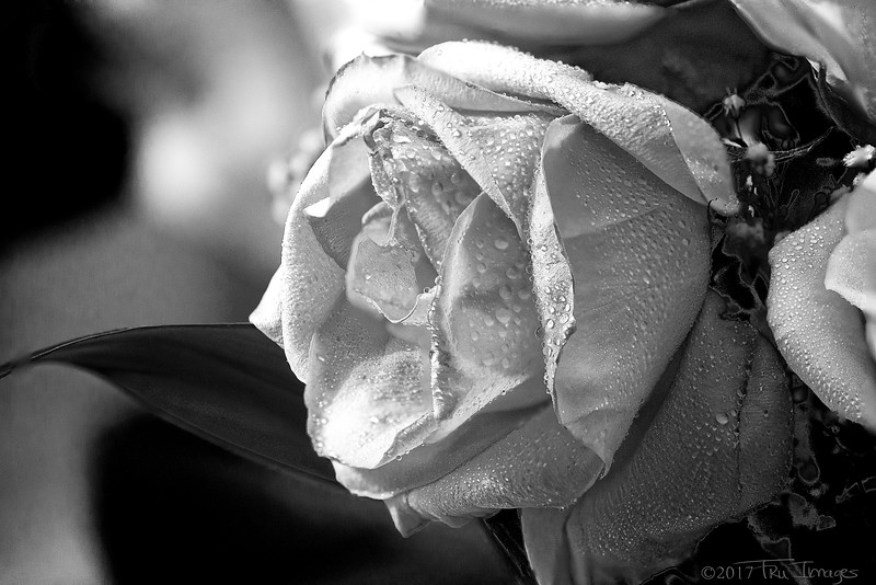 Monochromatic Rose