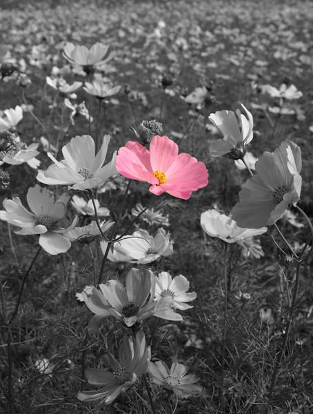 Pink single flowerB