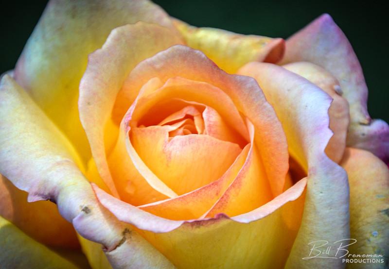 Flower 137