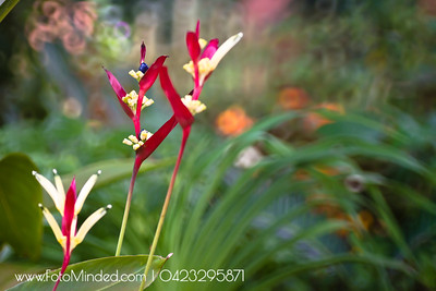 The bokeh effect of the background was not intentional. The lens and camera settings were overwritten by the humidity when it was shot.  I tried to replicate this effect, but could not get as nice as this.  Shot this at Chamundi Hill Palace resort's garden