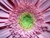 Store flower