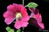 Flower 142
