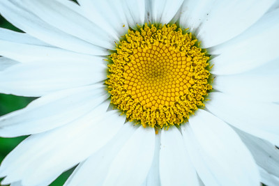 flowers17-001