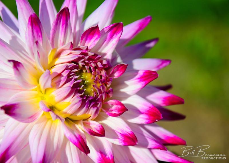 Flower 215