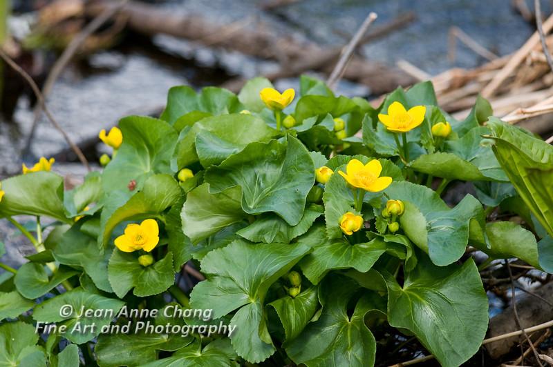 Wildflowers in our wetlands.