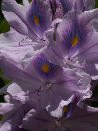 <center><b>Flower closeup</b></center>