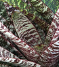 <center><b> Bromeliad pattern </b></center>
