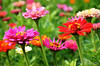 Flower 148