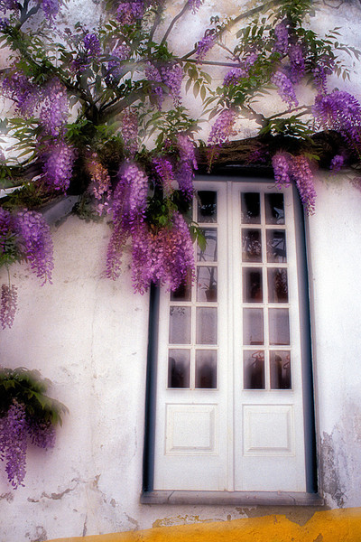 #133 Wisteria and Door, Obidos, Portugal