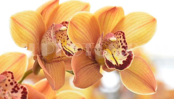 lotus13