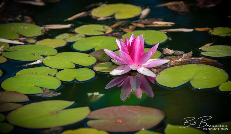 Flower 223