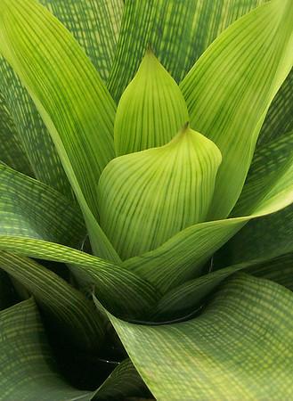 <center><b> Bromeliad Closeup </b></center>