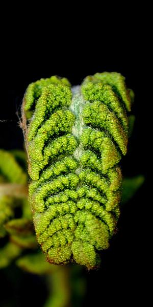 fern ferl vertical crop