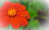 Flower 185