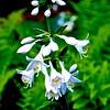 WNC Flowers0009