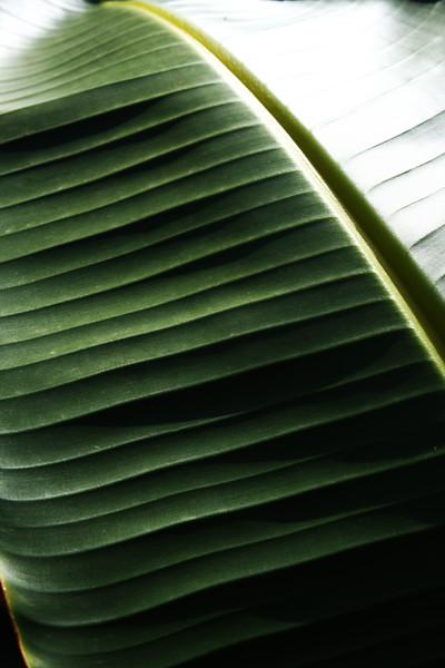 Banana Leaf IMG_4086