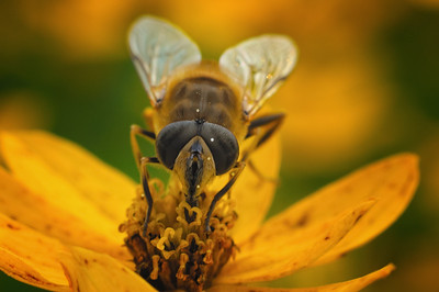 Drone Hover Fly