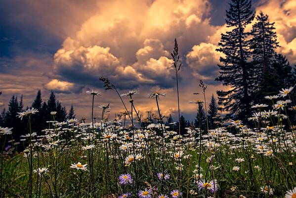 Fire in the Sky Meadow