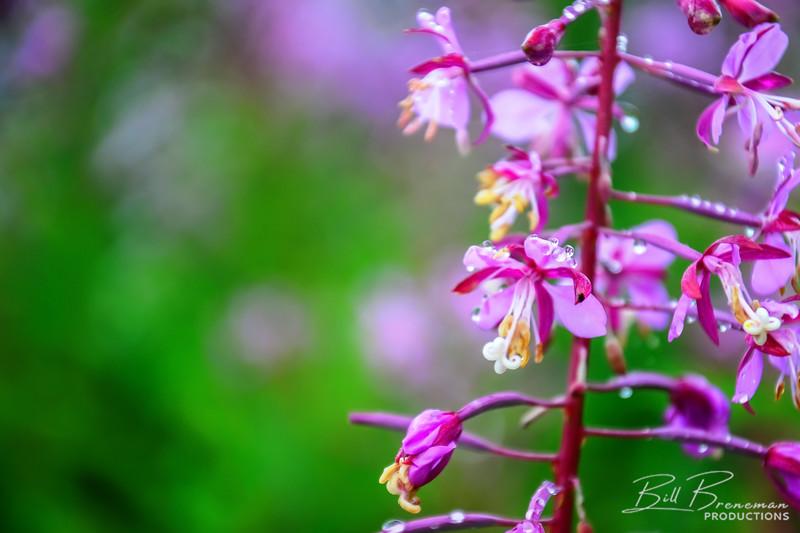 Flower 220